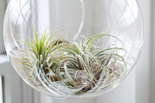 https://terrarium.com.sg/wp-content/uploads/2020/01/airplant-terrarium-1.jpg