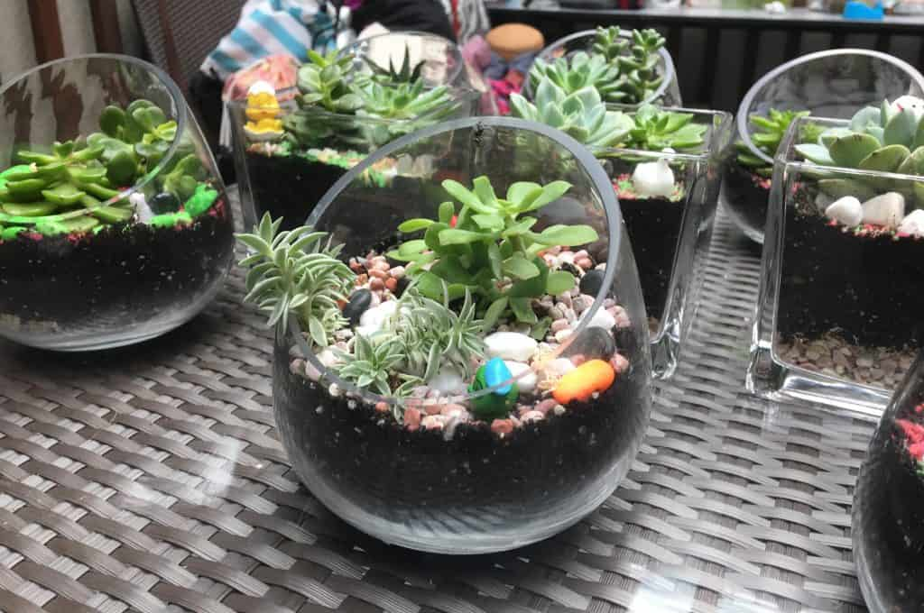 https://terrarium.com.sg/wp-content/uploads/2020/01/assorted-1.jpg